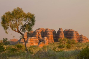 Tree, bungles, smoke